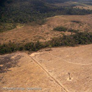 Fazenda Santa Rosa em funcionamento um ano após promover queimadas na região da Amazônia